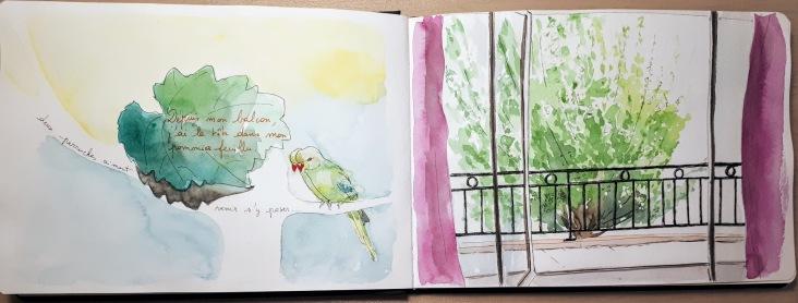 """extrait carnet de dessins, """"Mon petit jardin de ville"""""""
