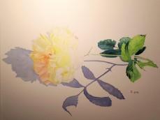 aquarelle rose 40 x 30 cm