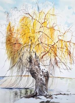 aquarelle 45 x 60 cm les longues branches caresses la surface de l'eau abondante des inondations d'hier