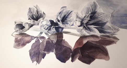 Amaryllis Aquarelle 29 x 66 cm